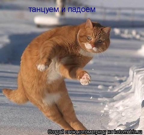 Котоматрица: танцуем и падоем