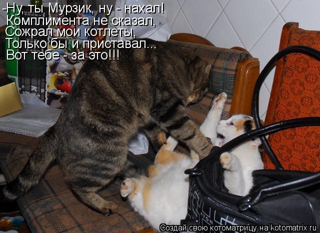 Котоматрица: -Ну, ты Мурзик, ну - нахал! Комплимента не сказал, Вот тебе - за это!!! Сожрал мои котлеты, Только бы и приставал...