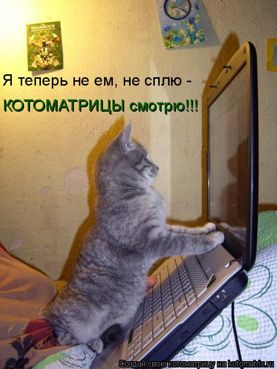 Котоматрица: Я теперь не ем, не сплю -  КОТОМАТРИЦЫ смотрю!!!