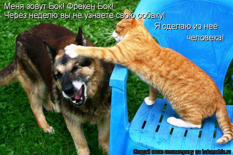 Котоматрица: Меня зовут Бок! Фрекен Бок! Через неделю вы не узнаете свою собаку! Я сделаю из неё человека!