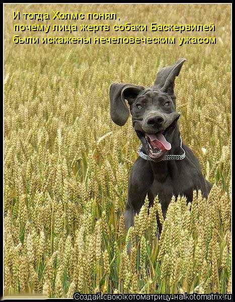 Котоматрица: И тогда Холмс понял,  почему лица жертв собаки Баскервилей были искажены нечеловеческим ужасом
