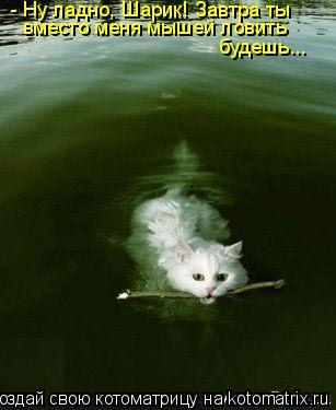 Котоматрица: - Ну ладно, Шарик! Завтра ты  вместо меня мышей ловить  будешь...