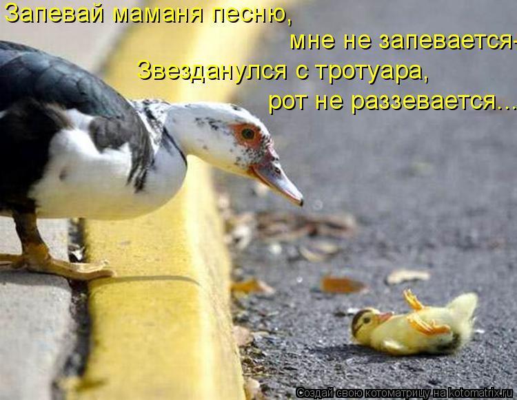 Котоматрица: Запевай маманя песню,   мне не запевается- Звезданулся с тротуара, рот не раззевается...