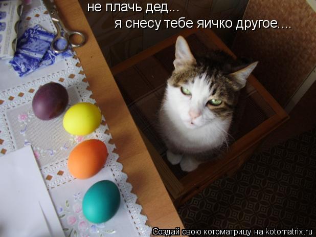 Котоматрица: я снесу тебе яичко другое.... не плачь дед...