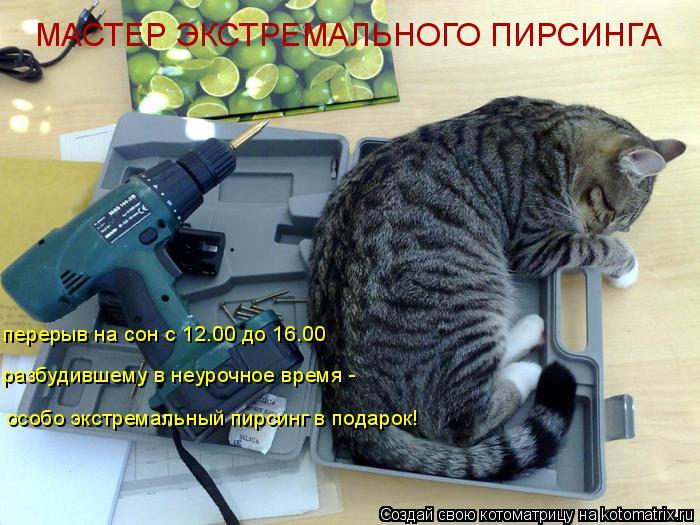 Котоматрица: МАСТЕР ЭКСТРЕМАЛЬНОГО ПИРСИНГА перерыв на сон с 12.00 до 16.00 разбудившему в неурочное время -  особо экстремальный пирсинг в подарок!