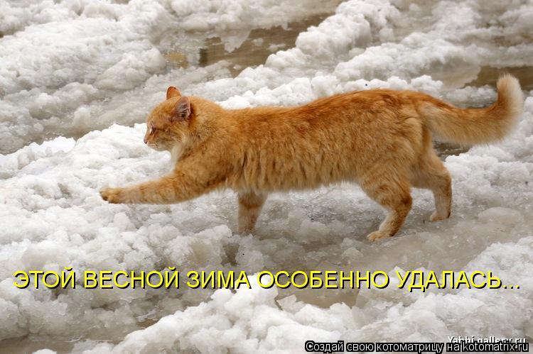 http://kotomatrix.ru/images/lolz/2009/03/23/wv.jpg