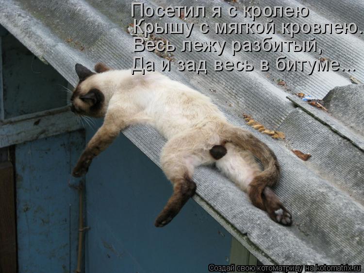 Котоматрица: Крышу с мягкой кровлею. Весь лежу разбитый,   Да и зад весь в битуме... Посетил я с кролею