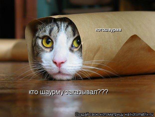 Котоматрица: кто шаурму заказывал??? котошаурма