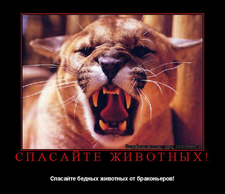 Котоматрица: Спасайте животных! Спасайте бедных животных от браконьеров!