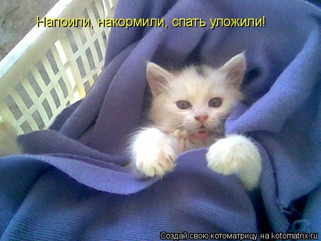 кошка она хочет спать слова воспитателя