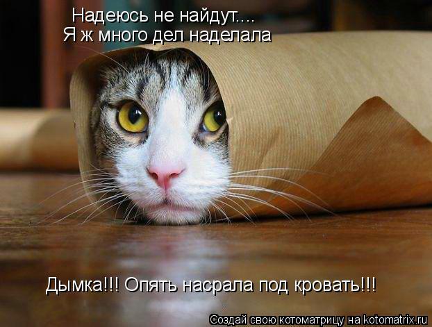 Котоматрица: Надеюсь не найдут....  Я ж много дел наделала Дымка!!! Опять насрала под кровать!!!