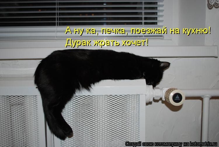Котоматрица: А ну ка, печка, поезжай на кухню! Дурак жрать хочет!