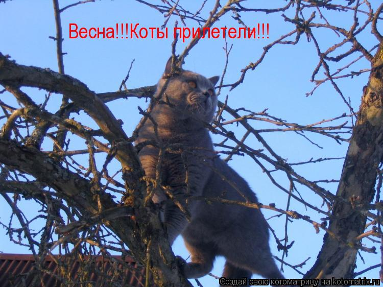 Весна!!!Коты прилетели!!!