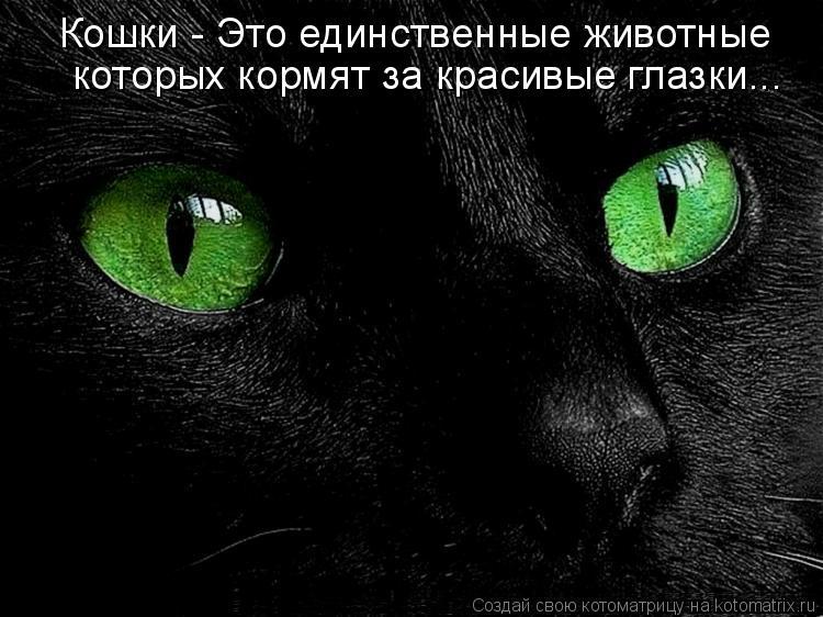 Котоматрица: Кошки - Это единственные животные  которых кормят за красивые глазки...
