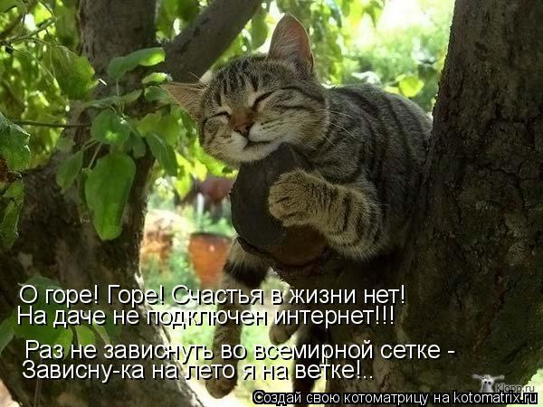 Котоматрица: Раз не зависнуть во всемирной сетке -  Зависну-ка на лето я на ветке!.. О горе! Горе! Счастья в жизни нет! На даче не подключен интернет!!!