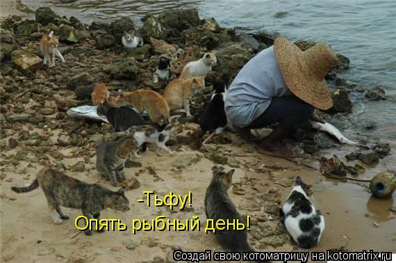 Котоматрица: -Тьфу!  Опять рыбный день!