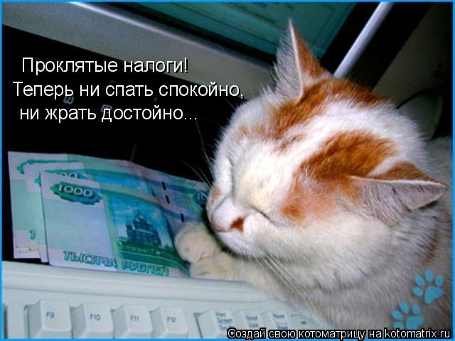 Котоматрица: Проклятые налоги! Теперь ни спать спокойно, ни жрать достойно...