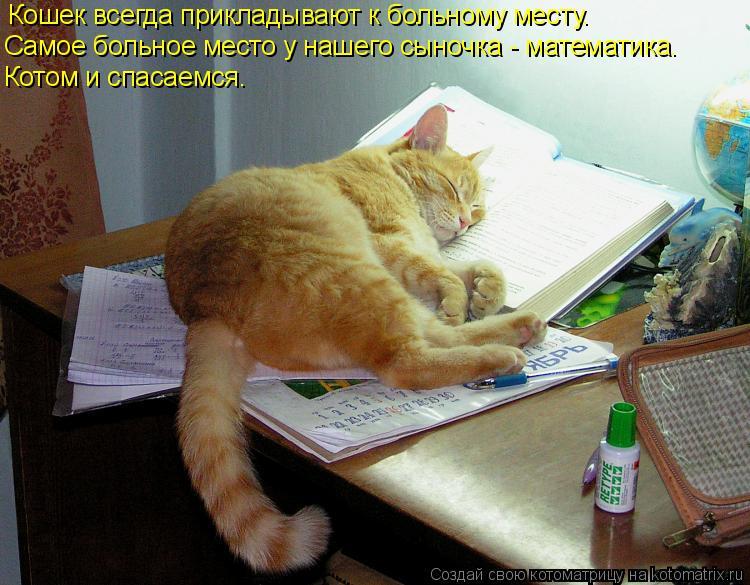 Котоматрица: Кошек всегда прикладывают к больному месту. Самое больное место у нашего сыночка - математика. Котом и спасаемся.