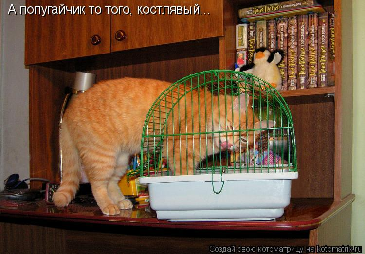 Котоматрица: А попугайчик то того, костлявый...