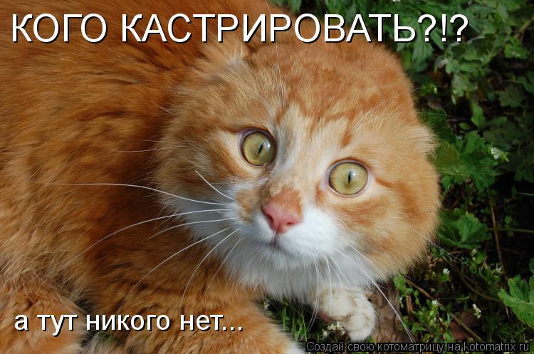 http://kotomatrix.ru/images/lolz/2009/03/24/Qg.jpg