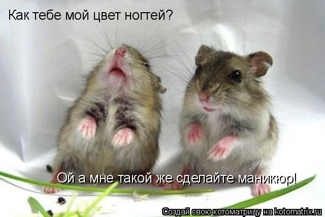 http://kotomatrix.ru/images/lolz/2009/03/24/RL.jpg