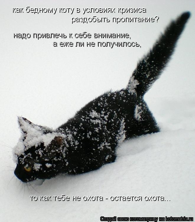 Котоматрица: как бедному коту в условиях кризиса раздобыть пропитание? надо привлечь к себе внимание, а еже ли не получилось,  то как тебе не охота - остае