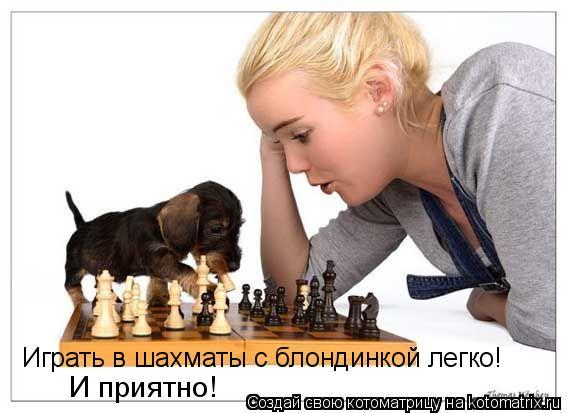 Котоматрица: Играть в шахматы с блондинкой легко! И приятно!