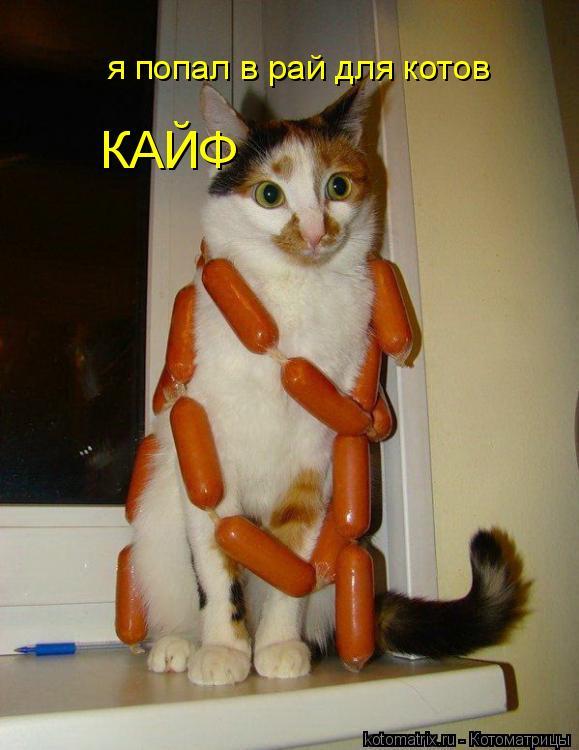 Котоматрица: я попал в рай для котов КАЙФ