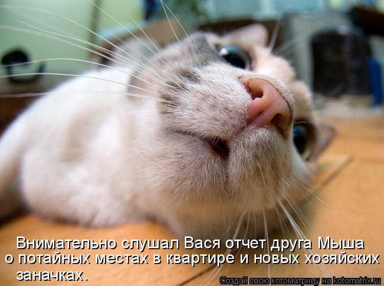 Котоматрица: Внимательно слушал Вася отчет друга Мыша о потайных местах в квартире и новых хозяйских  заначках.