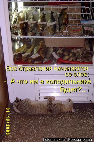 Котоматрица: Все отравления начинаются со слов: -  А что им в холодильнике будет?..