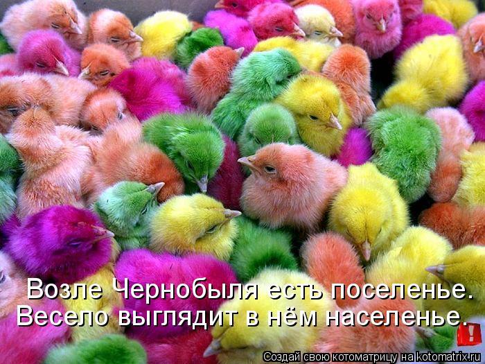 Котоматрица: Возле Чернобыля есть поселенье. Весело выглядит в нём населенье.