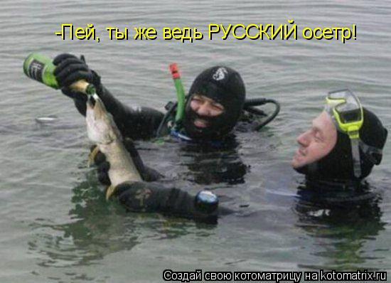 Котоматрица: -Пей, ты же ведь РУССКИЙ осетр!
