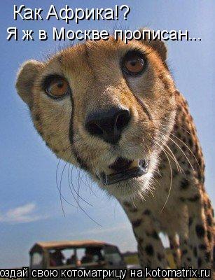 Котоматрица: Как Африка!? Я ж в Москве прописан...