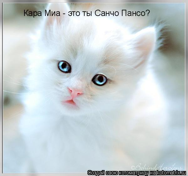 Котоматрица: Кара Миа - это ты Санчо Пансо?