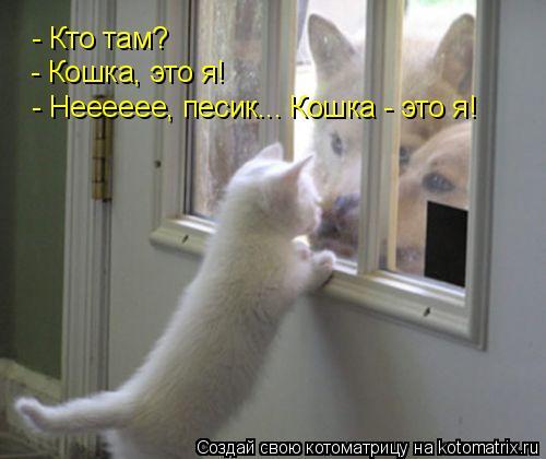 Котоматрица: - Кто там? - Кошка, это я! - Нееееее, песик... Кошка - это я!