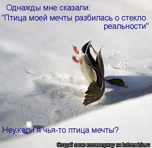 """Котоматрица: Однажды мне сказали: """"Птица моей мечты разбилась о стекло реальности"""" Неужели я чья-то птица мечты?"""