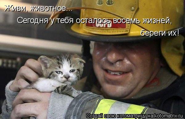 Котоматрица: Живи, животное...  Сегодня у тебя осталось восемь жизней, береги их!