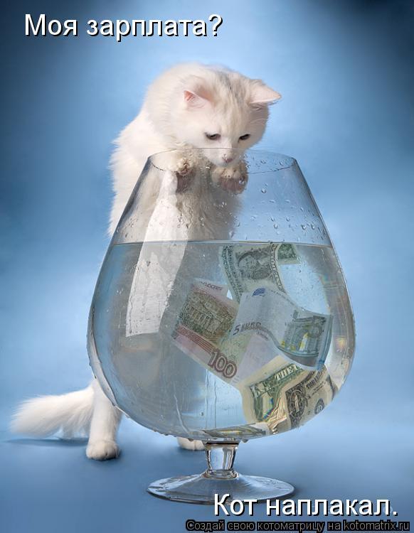 Котоматрица: Моя зарплата? Кот наплакал.