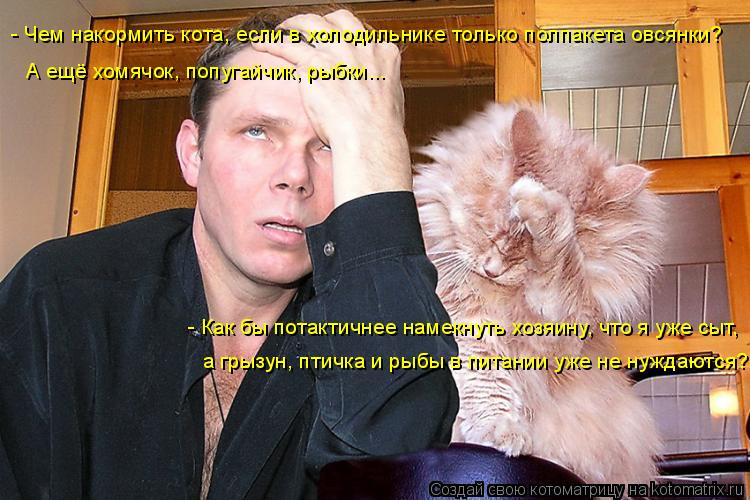 Котоматрица: - Чем накормить кота, если в холодильнике только полпакета овсянки? А ещё хомячок, попугайчик, рыбки... - Как бы потактичнее намекнуть хозяину
