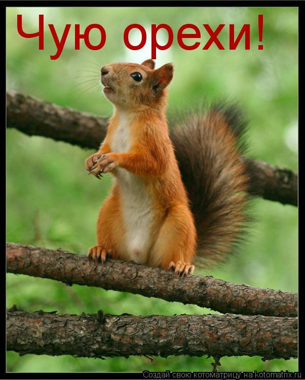 Котоматрица: Чую орехи!