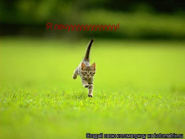 Котоматрица: Я лечууууууууууууу!