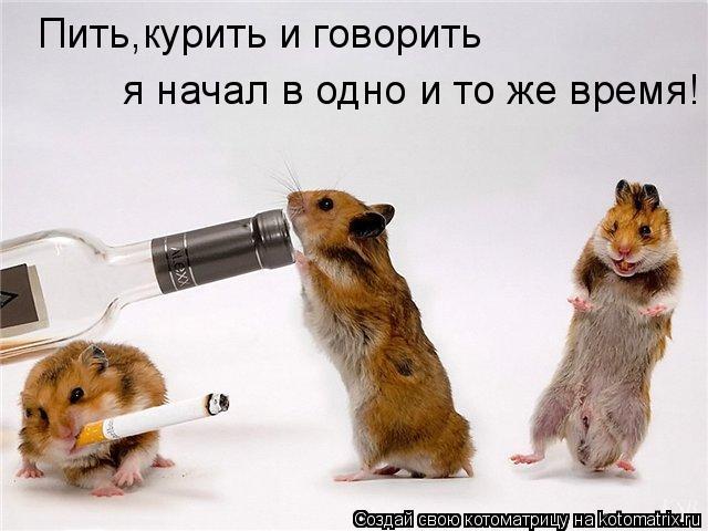 Котоматрица: Пить,курить и говорить  я начал в одно и то же время!