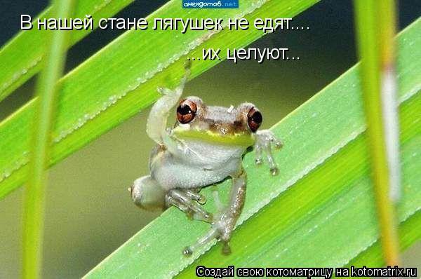 Котоматрица: В нашей стане лягушек не едят.... ...их целуют...