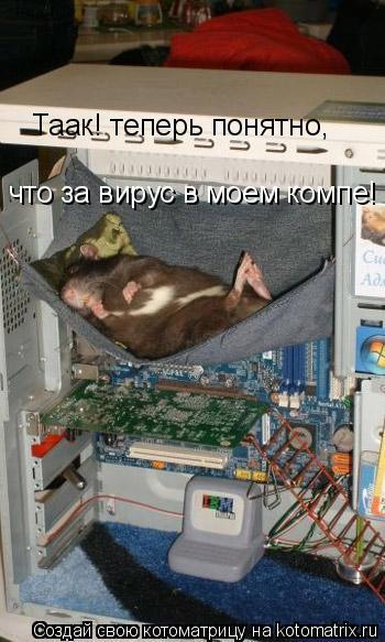 Котоматрица: Таак! теперь понятно,  что за вирус в моем компе!