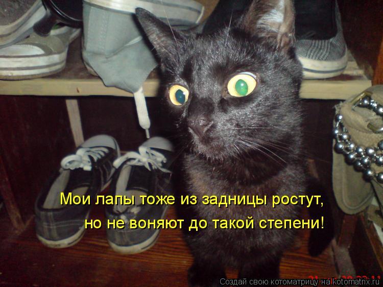 Котоматрица: Мои лапы тоже из задницы ростут, но не воняют до такой степени!