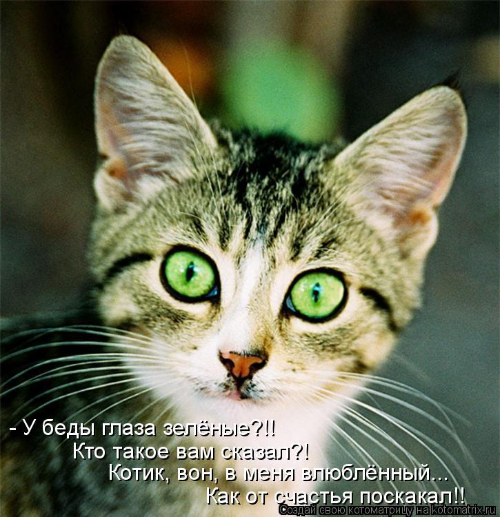 Котоматрица: - У беды глаза зелёные?!! Кто такое вам сказал?! Котик, вон, в меня влюблённый... Как от счастья поскакал!!