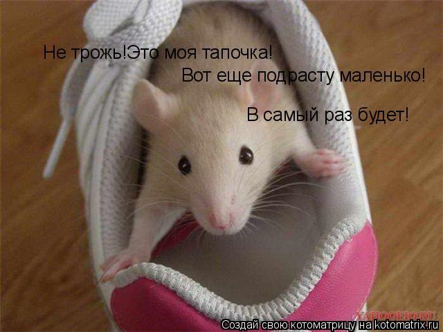 Котоматрица: Не трожь!Это моя тапочка! Вот еще подрасту маленько! В самый раз будет!