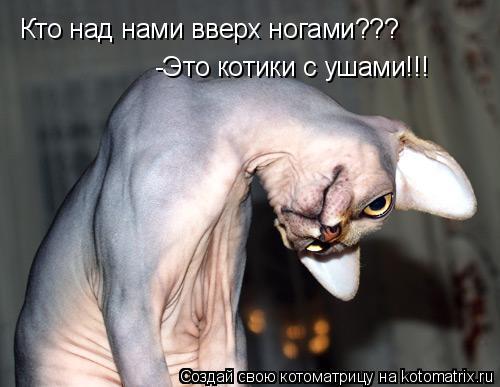 Котоматрица: Кто над нами вверх ногами??? -Это котики с ушами!!!