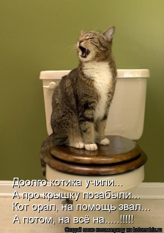 Котоматрица: Доолго котика учили... А про крышку позабыли... Кот орал, на помощь звал... А потом, на всё на.....!!!!!