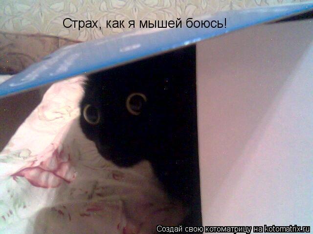 Котоматрица: Страх, как я мышей боюсь!